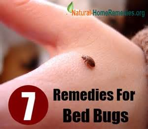 home remedies for bed bug bites bed bug home remedies