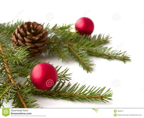 christmas branches royalty free stock photography image