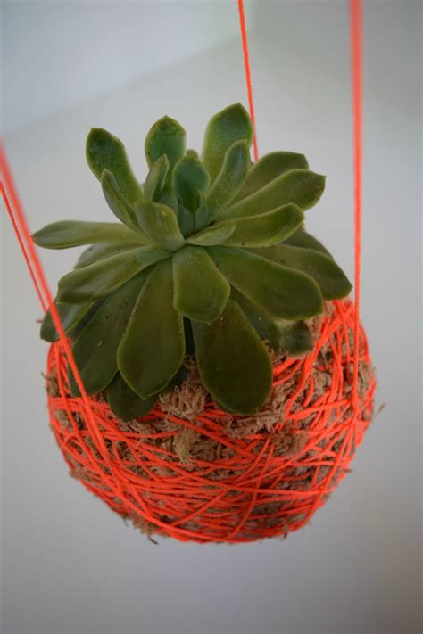 Window Planters Indoor by Diy Hanging Moss Ball Planter L Hanging String Plant
