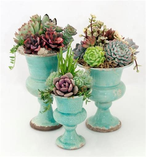 succulent care like synthetics are succulents fresh