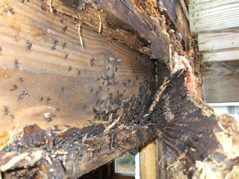 Do Flying Termites Eat Your House