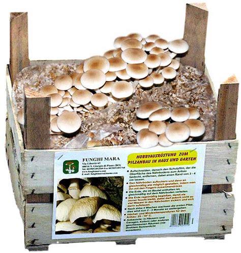 cucinare funghi coltivati coltivare funghi in casa in cassetta in sacco e nel legno