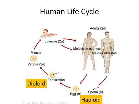 human cycle diagram human cycle diagram sales org chart nfl football