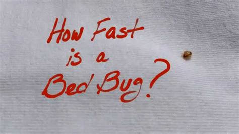 how fast are bed bugs how fast is a bed bug youtube