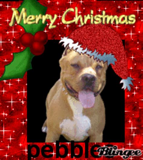 merry christmas pebbles  pit bull picture  blingeecom