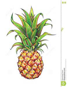 pineapple on a white background graphic drawing tropical fruit handwork stock illustration