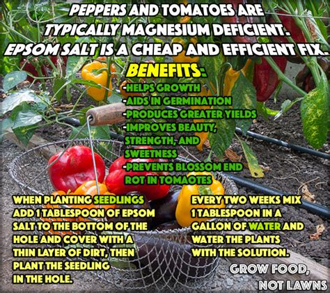 use epsom salt for gardening pictures photos and images