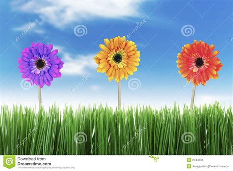 beautiful nature  spring royalty  stock photography