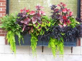 container gardening ideas container gardening ideas protecting window flower boxes
