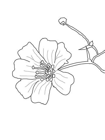 Baby's Breath Flower coloring page | Free Printable