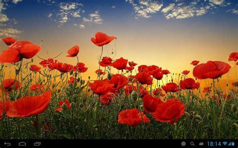 google images poppies poppies live wallpaper android apps on google play