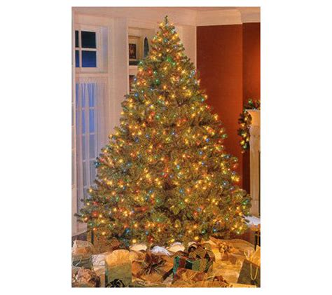 wwwqvccomprelit christmas trees bethlehem pre lit douglas fir tree qvc