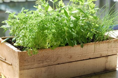 herb boxes garden therapy planting herbs and a mint limeade recipe