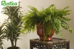 reconna 238 tre les maladies des plantes d int 233 rieur pratique fr