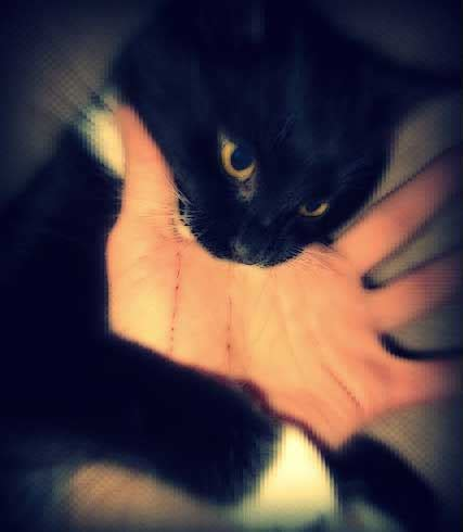 play biting difference between false cat aggression and real aggression