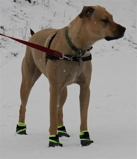running shoes for dogs winter running with your canadian running magazine