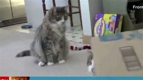 who is smarter cats or dogs cats vs dogs who is really smarter cnn