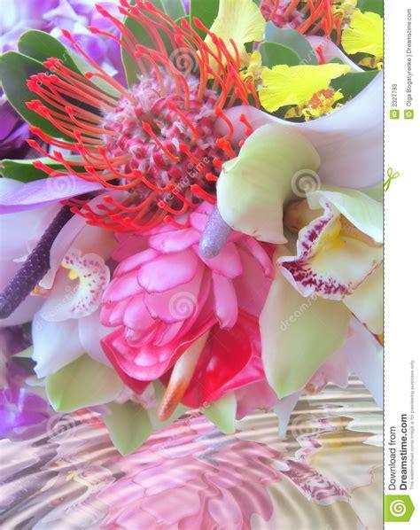 immagini fiori tropicali fiori tropicali immagine stock immagine di bridal fiore