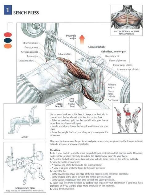 bench muscles flat bench barbell press chest anatomy workout my work