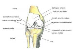 dolore al ginocchio parte laterale interna pollice dello sciatore artros