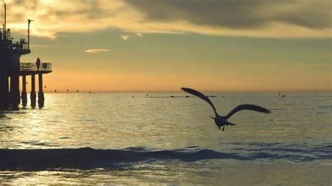 gabbiano mare il mare e il gabbiano