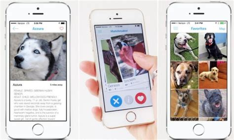 pet technologies news news app pet technologies barkbuddy app matches up owners with rescue pets daily