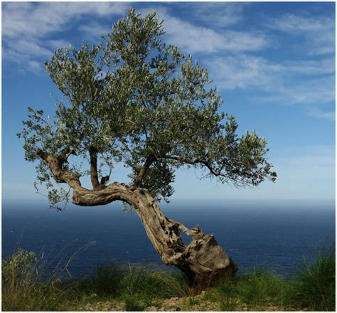 winterharte pflanzen für garten 36 mediterrane pflanzen f 252 r den garten garten haus