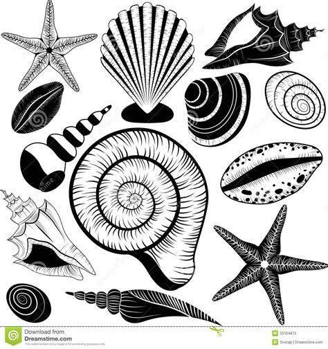 shells collection vector set with seashells and starfish