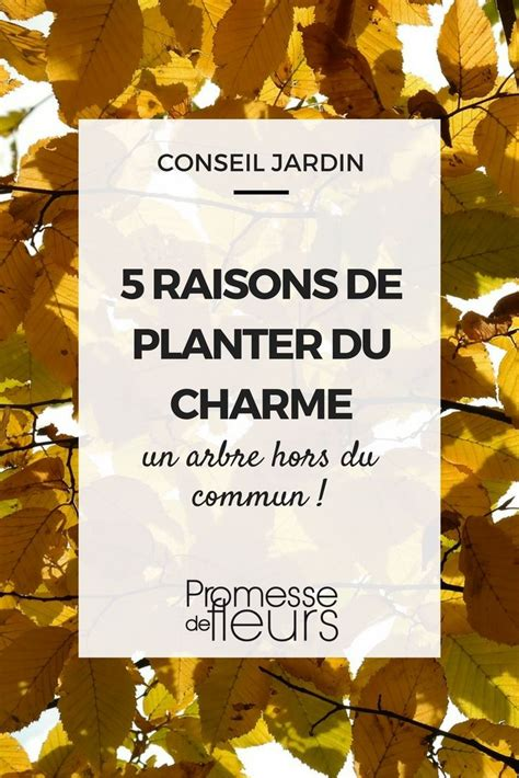 Arbre Charme Photo by 5 Raisons De Planter Le Charme Un Arbre Hors Du Commun