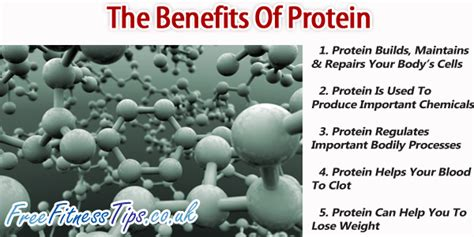 protein benefits the benefits of protein free fitness tips