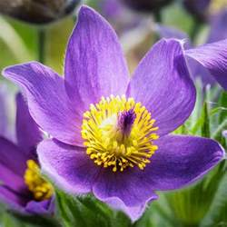 Flowers Sioux Falls Sd - south dakota bing images