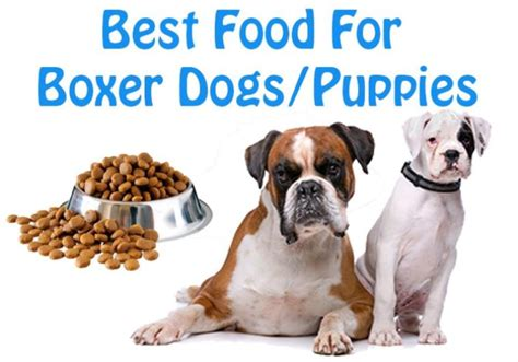 best breed puppy food the best foods for boxer breed dogs puppies jerusalem post