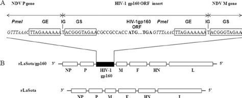 f protein ndv genome maps of parental recombinant ndv lasota rlasota