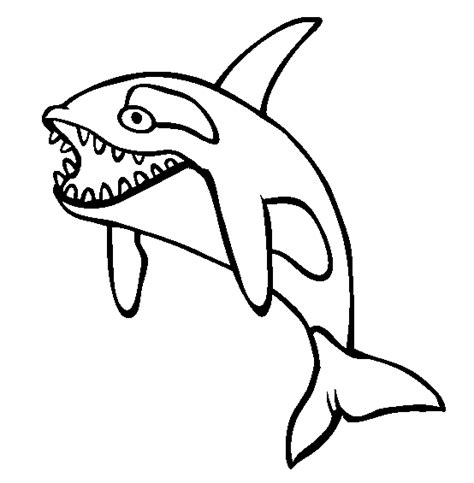 free coloring pages killer whale orca coloring pages clipart panda free clipart images
