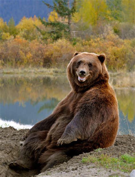 fotos animales riendose 20 fotos graciosas de animales ri 233 ndose que te alegraran