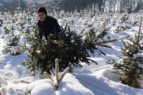 forestries open christmas tree season stateimpact texas