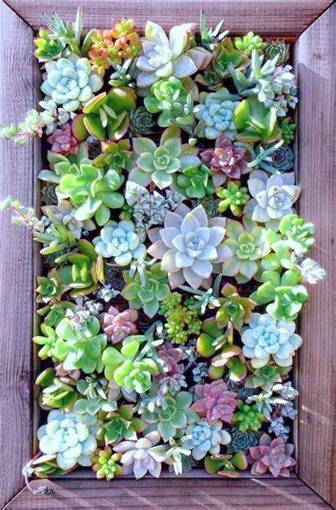 vertical garden succulent