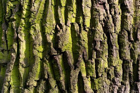 ruff bark algae bark free texture