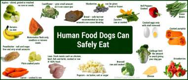 image result for food for dogs with diarrhea leishmania in dogs suggested