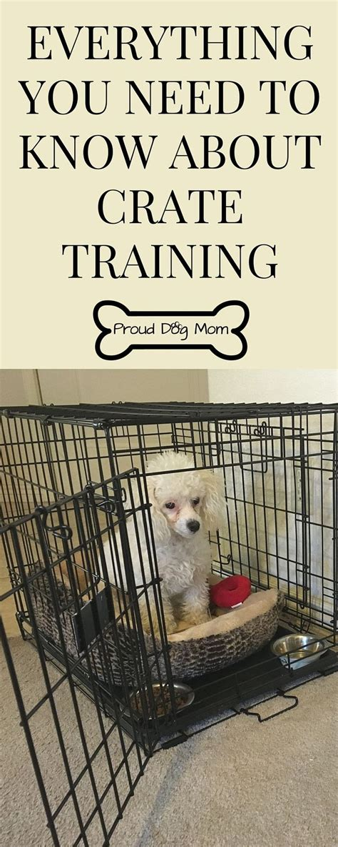 crate training best 25 crate training ideas on pinterest puppy crate