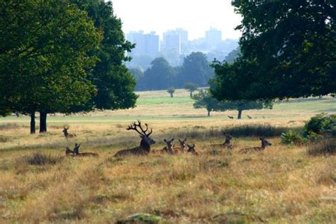 richmond park cyclist fined 163 400 for speeding after being clocked at 38mph in richmond park