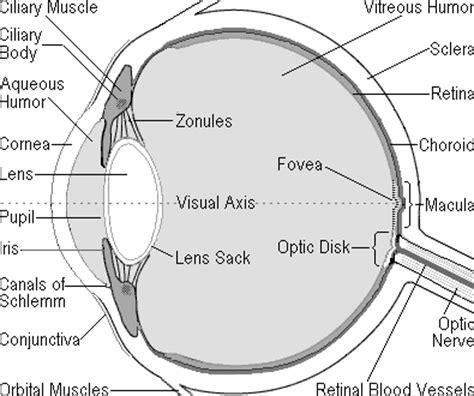 cross section of the eye the human eye