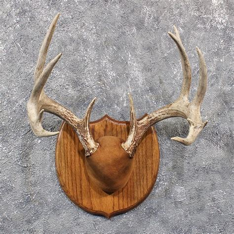 antler plaques bing images