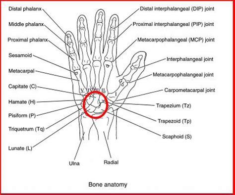 bone joint diagram doctors gates june 2010