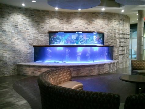 aquarium design ken saint leo university student housing featured on tanked