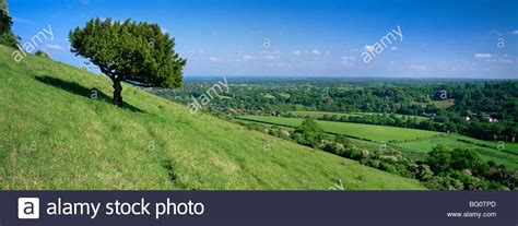 8 cherry tree box hill south summer view south with box tree from box hill downs surrey stock photo royalty free