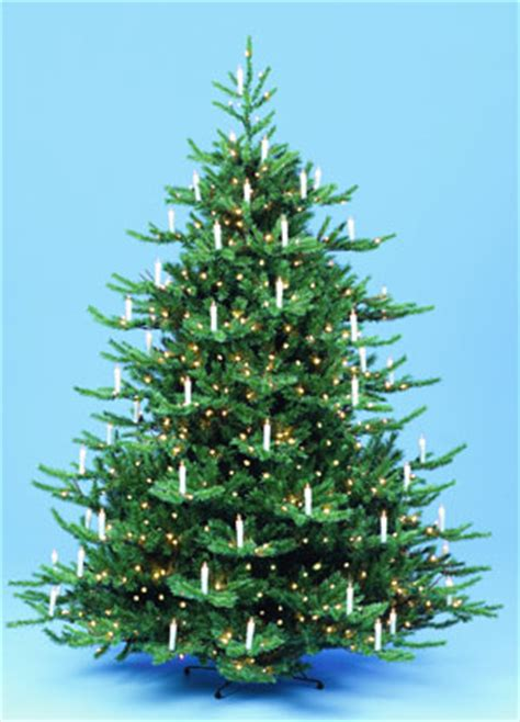 pagan christmas tree yule tree tree of