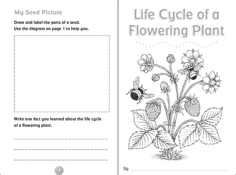cycle of plants and animals worksheets 10 ready to go resources for teaching cycles scholastic