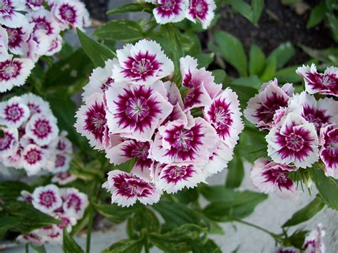 names and pictures of garden flowers garden flowers names home design ideas
