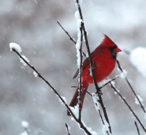 best 28 weather cardinal ont 7 birds you will see in